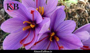 قیمت خرید زعفران در ایران