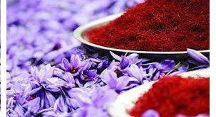 آموزش رایگان کاشت زعفران صادراتی