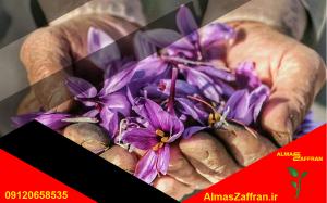 زعفران برای صادرات