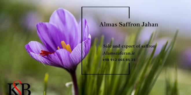 مرجع خرید زعفران سرگل ممتاز اصل قائنات